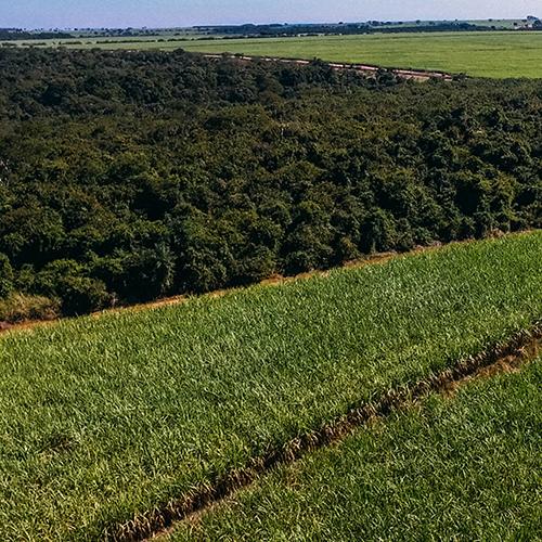 Sugarcane Sustainability