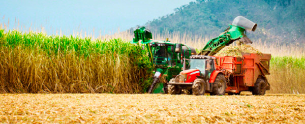 Brazilian sugarcane sector