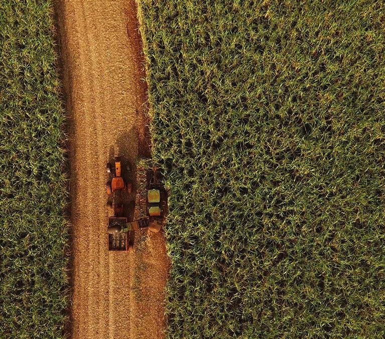 Sugarcane harvest for the second half of September 2021